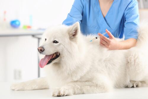 Se puede medicar a una perra preñada