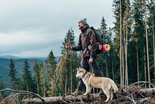 Tips para hacer senderismo con el perro