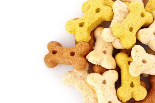 Snacks que no debes dar a tu perro