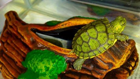 Terrario para tu tortuga