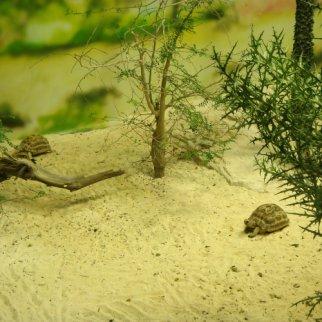 Terrario para tortuga casero