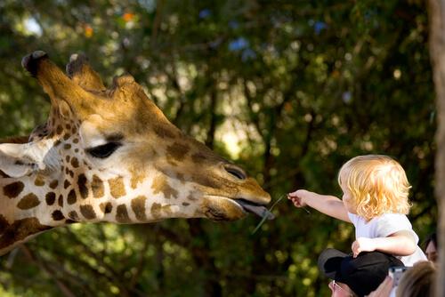 Zoológico con niños