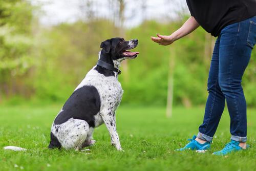 Psicología aplicada en el adiestramiento para perros