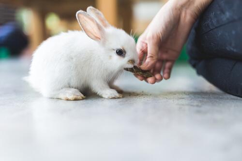 La importancia del heno en la alimentación de los conejos