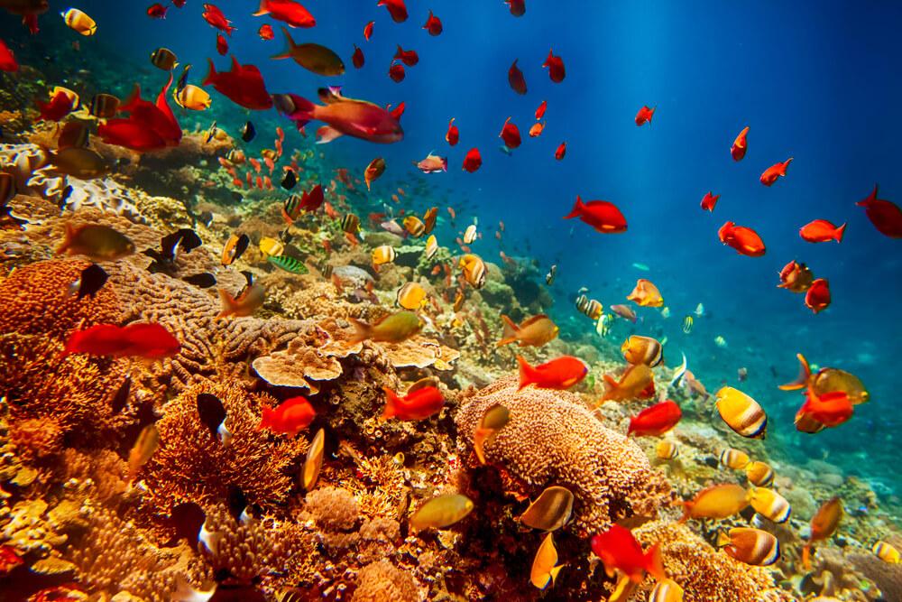 8 animales marinos más raros del mundo
