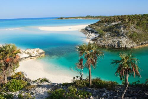 Ave extinta reaparece en las Bahamas