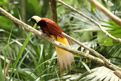 Aves del paraíso: especies y características