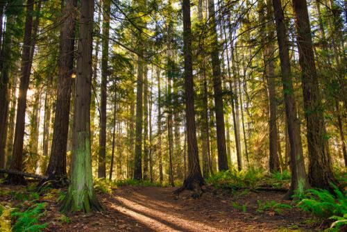 Bosques de Vancouver