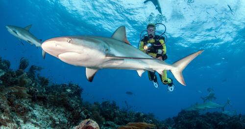 Bucear con tiburones, qué cuidados hay que tener en cuenta