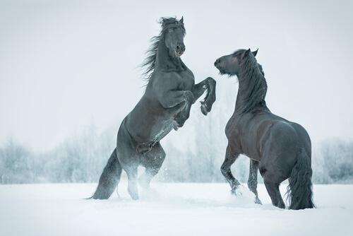 Descubren un caballo prehistórico congelado