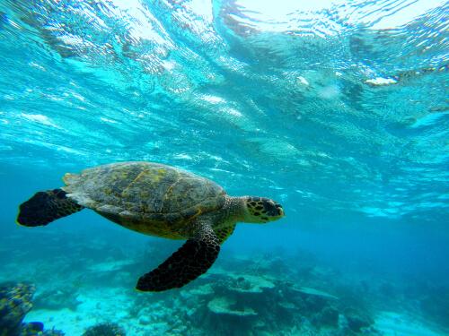 Caparazones de las tortugas