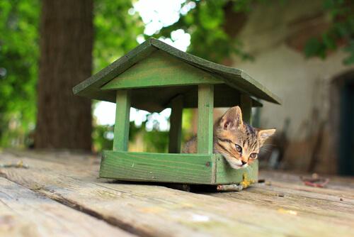 4 совета построить дом для кошек