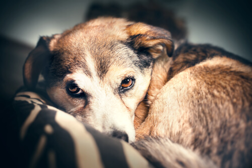 Refuerzos positivos y refuerzos negativos a la hora de castigar a tu mascota
