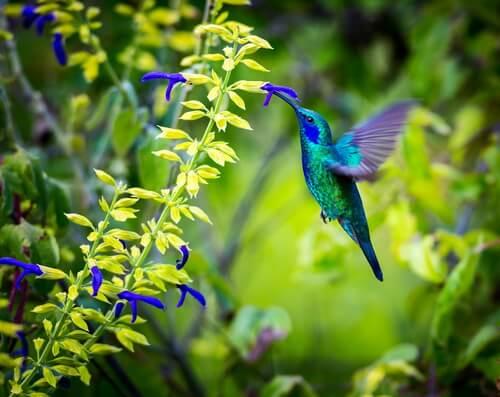 Coevolución de flores con colibrí