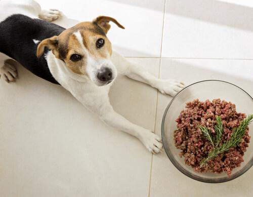 Comida para perros rica en proteínas