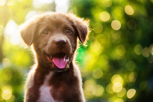 Cómo tratar el hipo en los cachorros