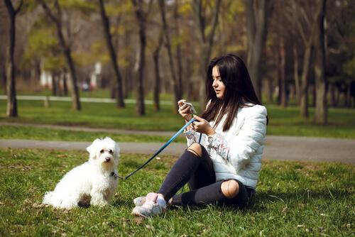 Cómo educar a un perro en el paseo