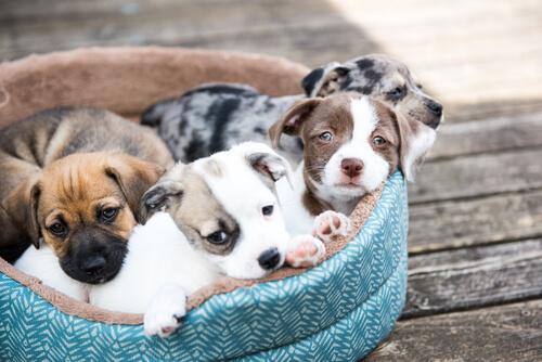 Cómo quitar el hipo en cachorros