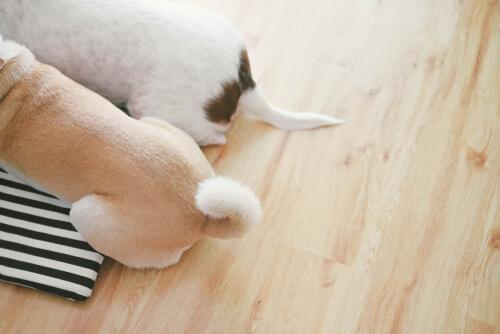 Cómo se comunica tu perro a través de la cola