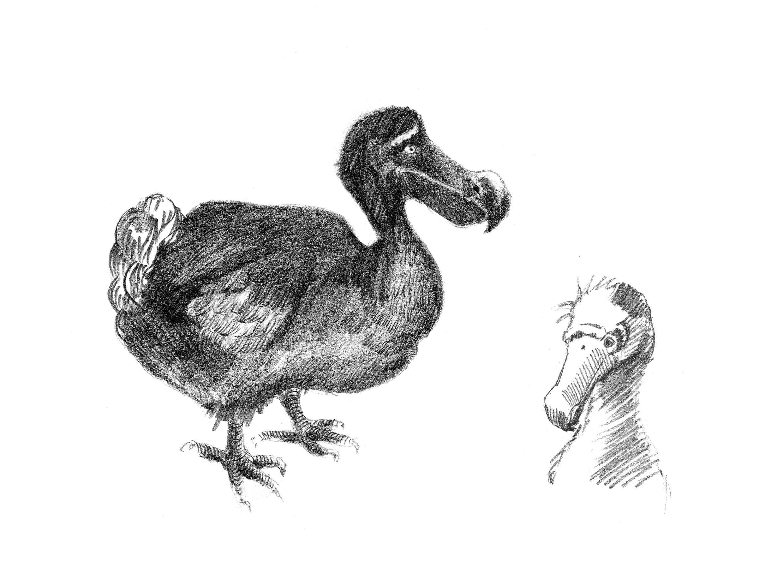 Comportamiento del dodo