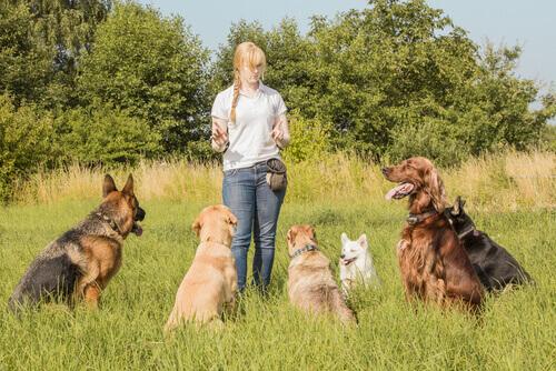 7 consejos para elegir al mejor cuidador para tu perro