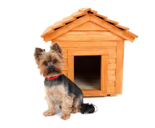 Decoración de casa para perros