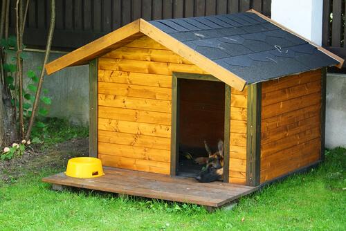 Decorar la casa de tus perros