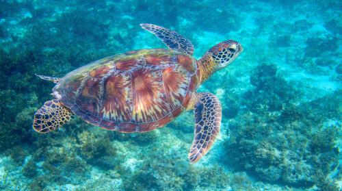 Edad de la tortuga: caparazón