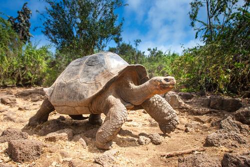 Estructura del caparazón de la tortuga