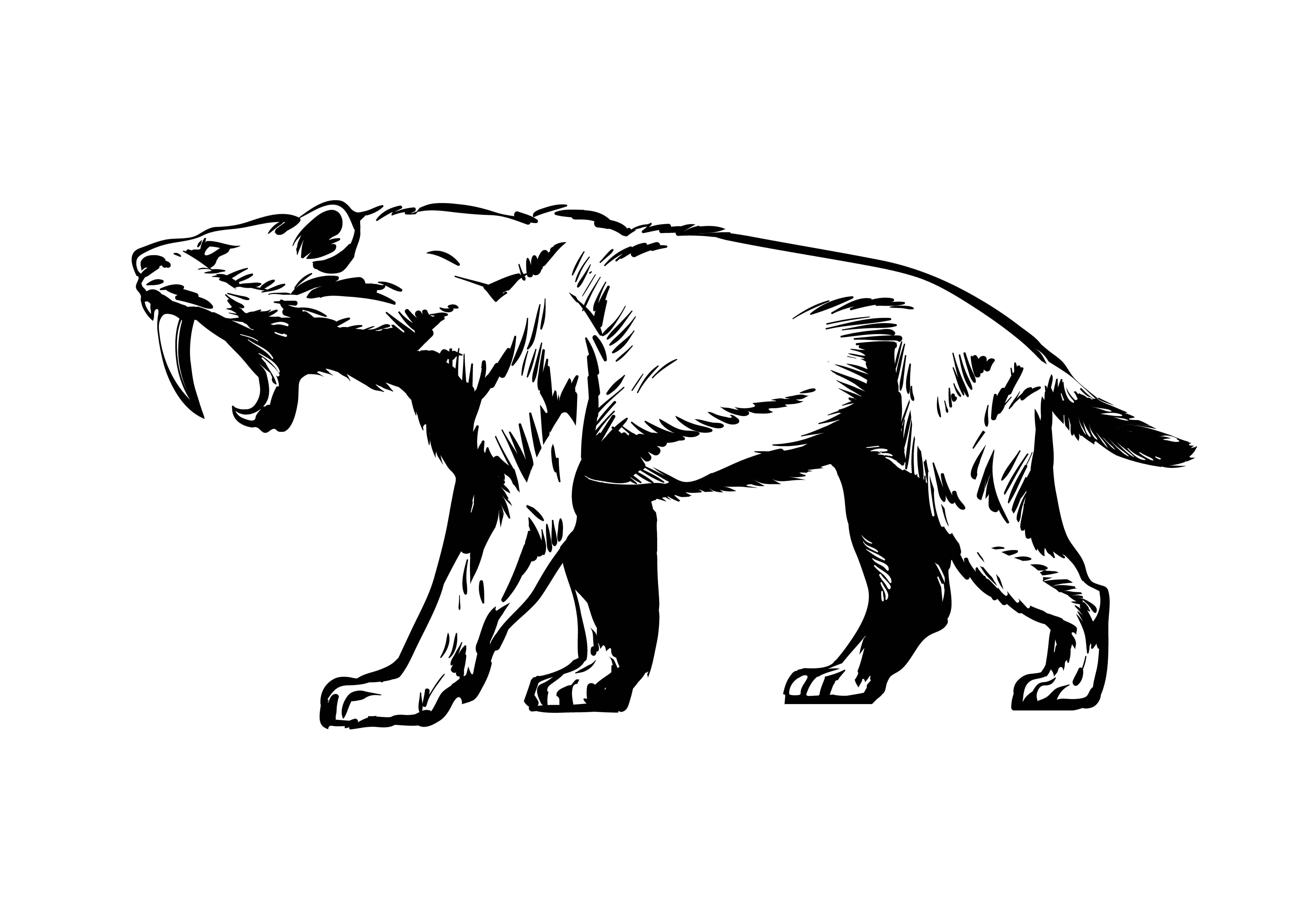 Félidos extintos: Smilidon