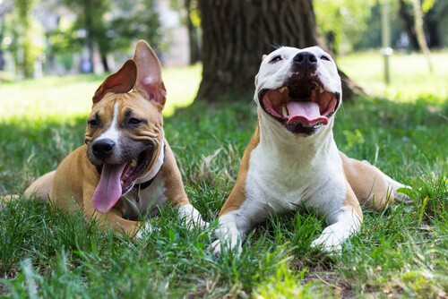 Importancia de que tu perro aprenda a socializar