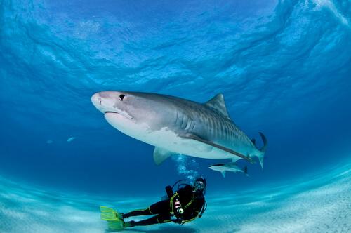 Inmersión con tiburones