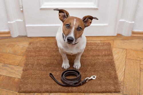 Instruir a un perro durante el paseo cotidiano