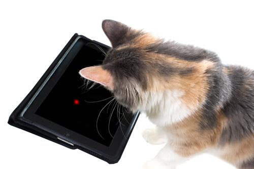 7 juegos de tablet para gatos