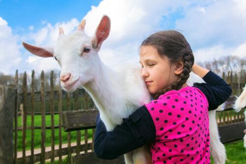 Las cabras prefieren a la gente sonriente