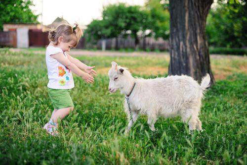 Las cabras prefieren que sonrías
