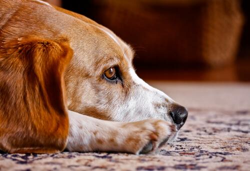 ¿Los perros tienen alma? Descubre todo sobre ello