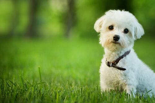 Los perros tienen alma y van al cielo