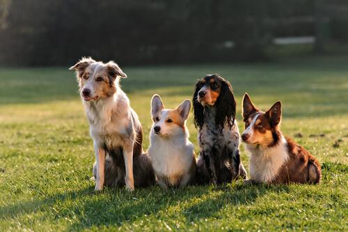 Los perros y la socialización