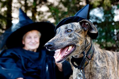 Magia: ¿cómo reaccionan los perros?