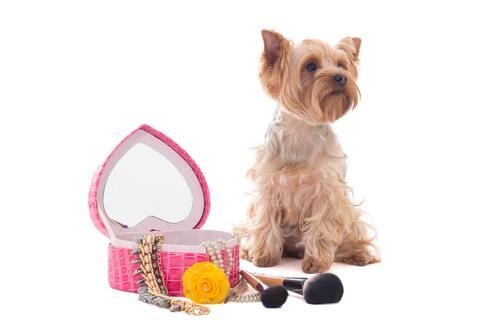 Maquillaje para mascotas