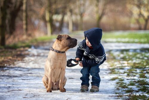 ¿Cuáles son las mascotas ideales para niños pequeños?