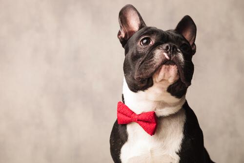 Mejores regalos para los amantes de los perros