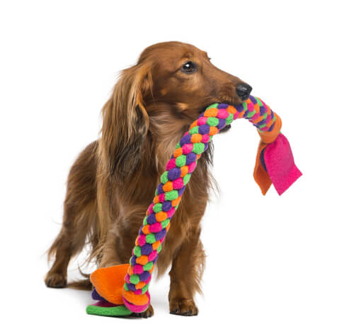 Mordedor para tu perro: cuerda