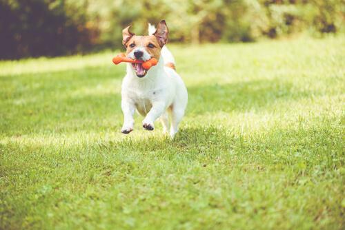 Mordedor para tu perro: hueso