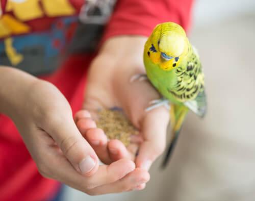 Pájaros como mascotas para niños