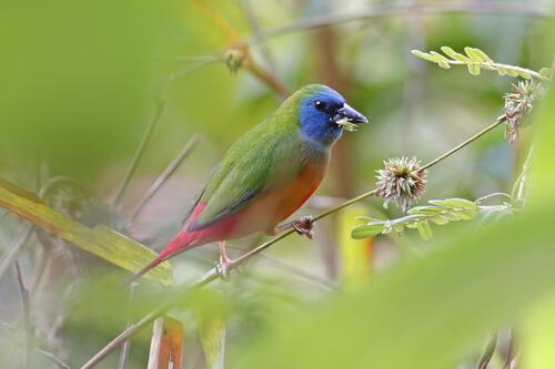 6 clases de pájaros tropicales