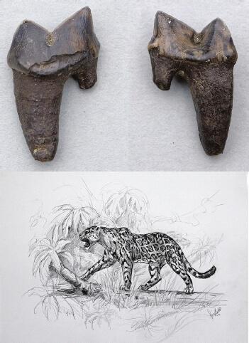 Panthera (onca) gombaszoegensis