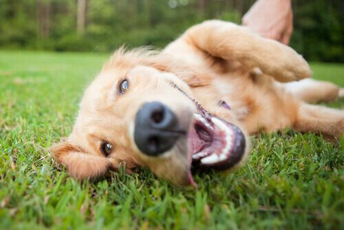 Parásitos internos caninos