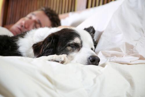 Parecido entre perros y sus dueños